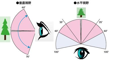 緑内障の視野